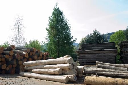 boles: storage of boles in the Black Forest Stock Photo
