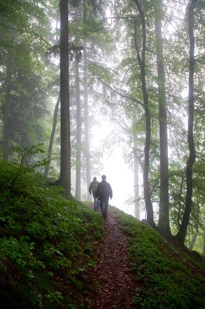 rambler: rambler in a foggy forest through the Black Forest  Stock Photo