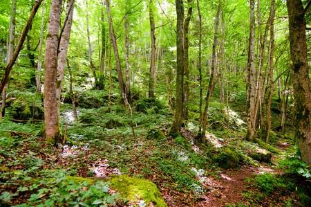 walking trail: sentiero attraverso i boschi del Wutachschlucht nella foresta nera Archivio Fotografico