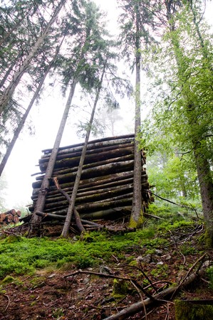 boles: stacked boles hillside stopped by healthy trees