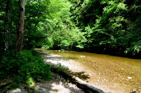 arroyo: calm river in the sun in the Black Forest between green trees