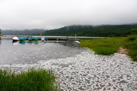 landing stage: covered boats at the landing stage of a foggy wet forest lake