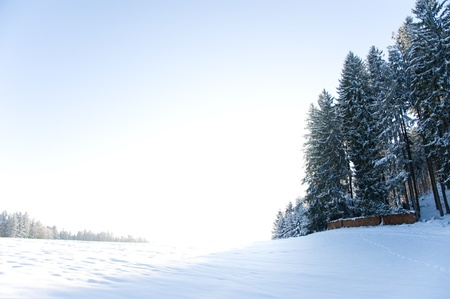 high plateau: snowy high plateau in the Black Forest with conifers and stacked wood and white meadow