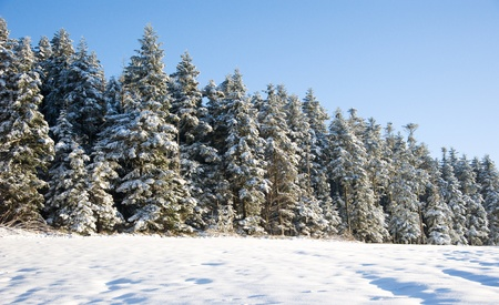 winterly: winterly mood in Black Forest with trees and meadow Stock Photo