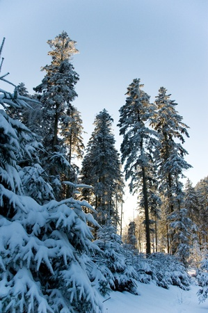 winterly: winterly landscape in the Black Forest