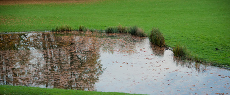 reflektion: fishpond in a park covered with autumnal leaves