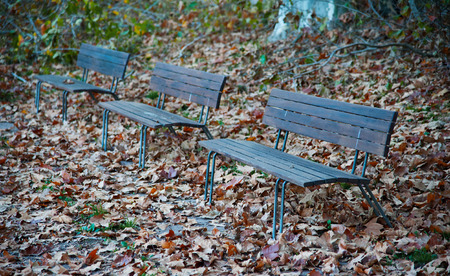 orphaned park benches between autumn leaves in a park  Stock Photo