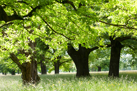luscious: cooling shade under luscious  broad-leaved trees Stock Photo