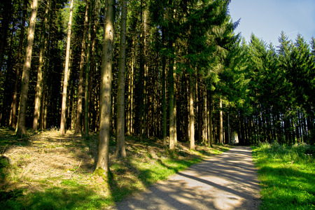 a shady forest path under conifers in the summertime in the Black Forest photo