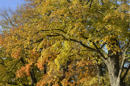 golden brown trees and two little birdhouses on a sunny autumn day photo