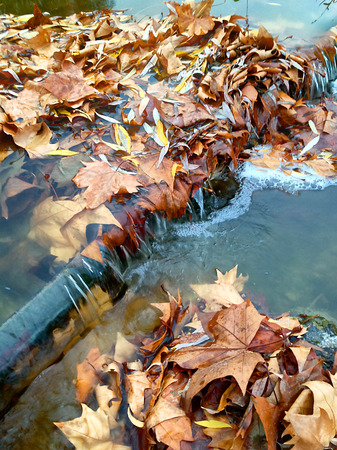 autumnally: autumnally colored leaves in brown and yellow on a sluice in a small stream