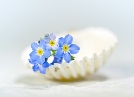 Forget.me-not on shell,macro photo  photo