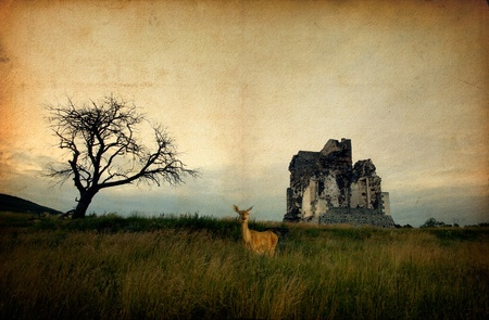 church building: Church ruin and deer on old linen background