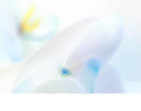 Blue orchid petals on white background photo