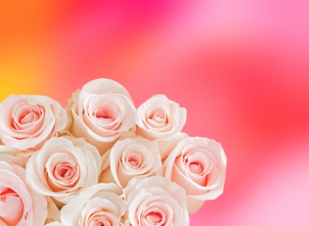 Beautiful pink roses on pastel background with lights photo