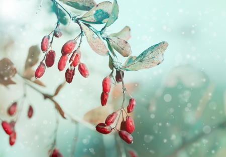Red berries with snowflakes photo