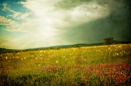 sun rise: Flowery meadow before a storm, old grunge vintage background