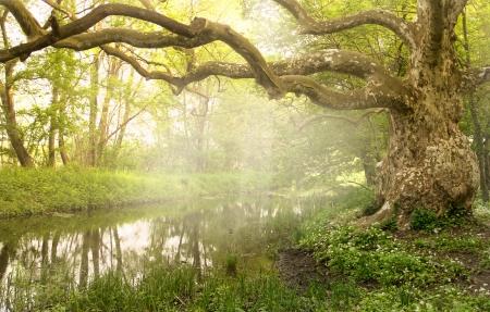 Viejo árbol se encuentra cerca del arroyo Foto de archivo - 20457030