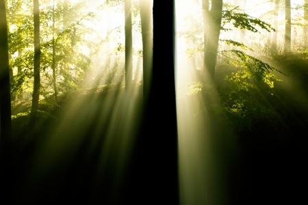 seasonic: Fairy forest