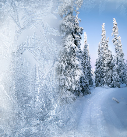 Arctic forest in winter photo