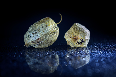 physalis: Physalis on black background with bokeh