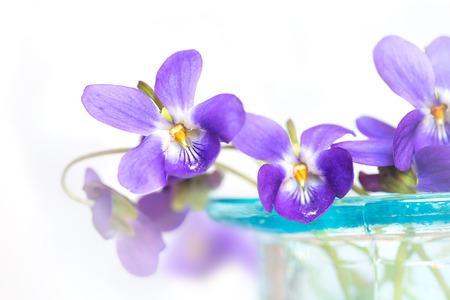 glass vase: Violets in blue glass vase