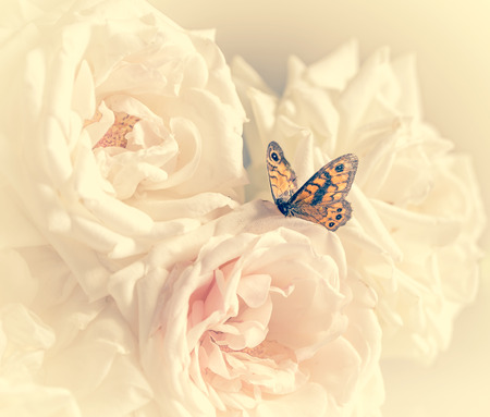 pastel roses with butterfly to holiday with cream filter