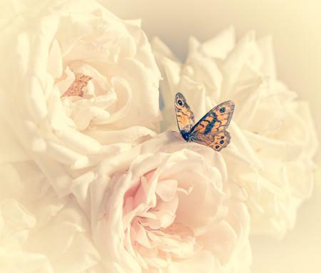 Roses pastel avec papillon vacances avec filtre à la crème Banque d'images - 38917363