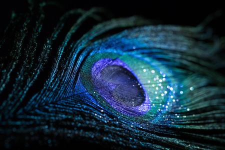 Kleurrijke pauwenveer