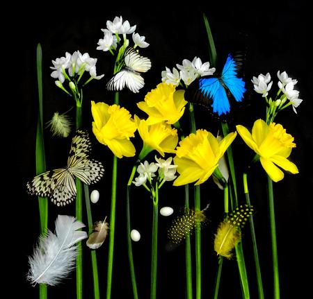 Jonquilles et papillons sur fond noir Banque d'images - 74676651
