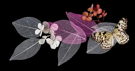 Dentelle feuilles sur fond noir avec papillon Banque d'images - 74677071