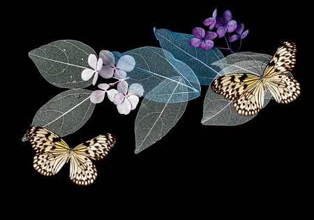 Lace leaves on black background with butterflies