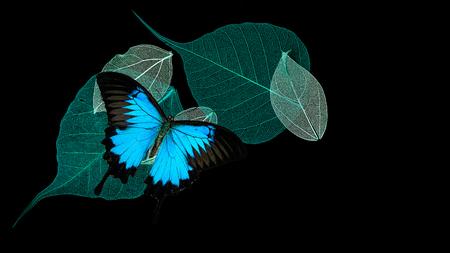 Dentelle feuilles sur fond noir avec papillon Banque d'images - 74677055