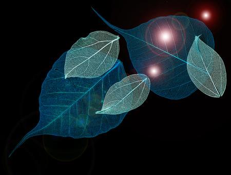 Les feuilles de dentelle sur fond noir Banque d'images - 75705045