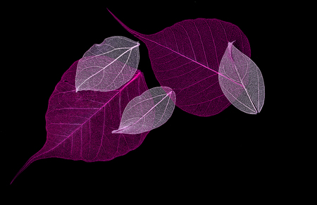 Les feuilles de dentelle sur fond noir Banque d'images - 75705040