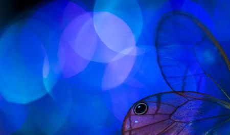 Les ailes de papillon et les bokeh colorés Banque d'images - 76651436