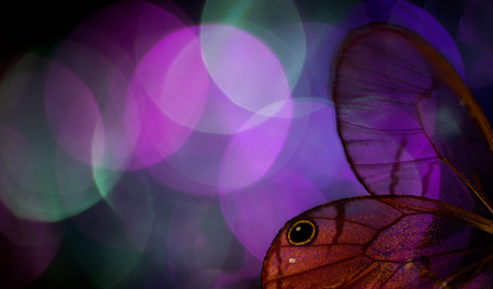 Les ailes de papillon et les bokeh colorés Banque d'images - 76651437