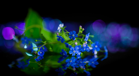 Forget-me-not flower and reflection Banque d'images - 75707586