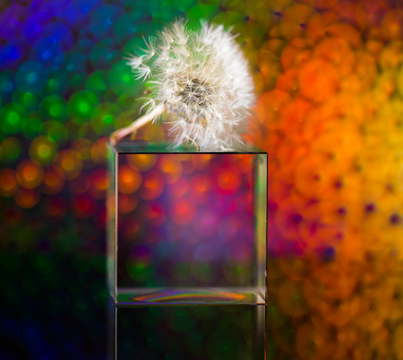 There is a dandelion on the glass cube Zdjęcie Seryjne