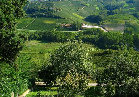 View on hilly Italian countryside and vineyards photo