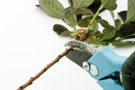 snipping: Pruning with cutting shears