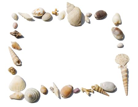 Frame made of exotic shells isolated on white  photo