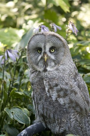 Great gray wol in green surroundings Stock Photo - 5375634