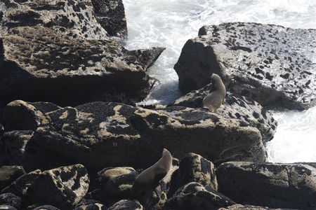 Two young and furry seals on rocks in New Zealand Stock Photo - 6092163