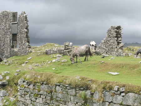 farmlife: Horses near a ruin on the Dartmoor moors