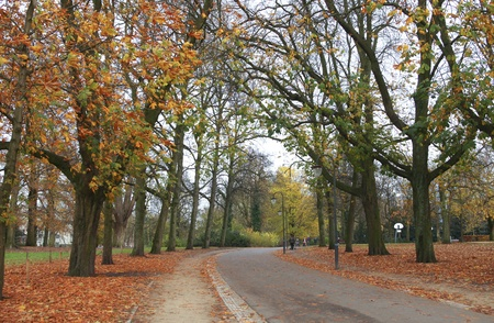Road throught park in the fall photo