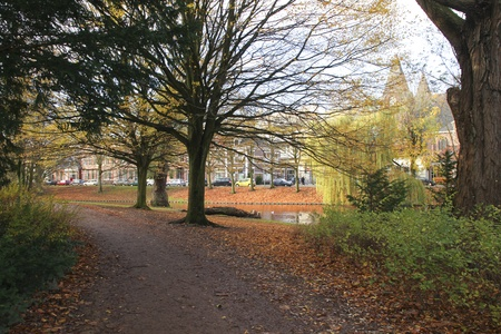 fagus grandifolia: Path through a park in the fall Stock Photo