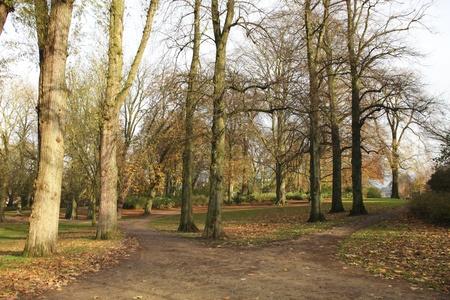 fagus grandifolia: Two roads in a park