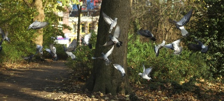 Flock of pigeons in park photo