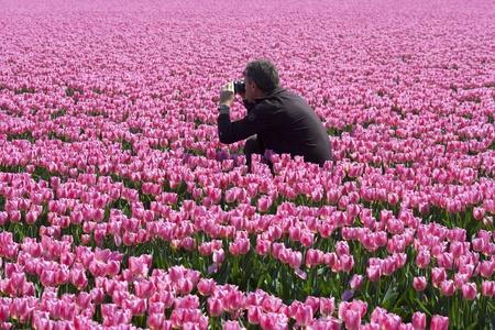Man between pink tulips making photographs photo